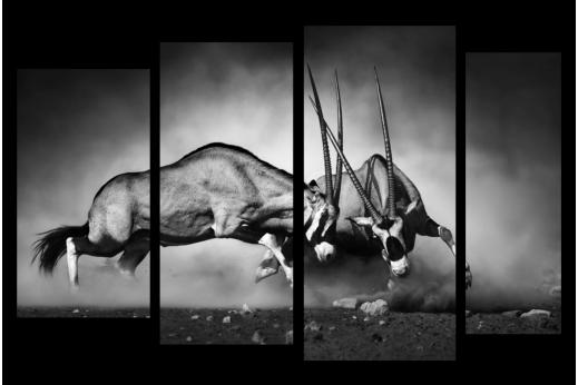 Модульная картина Антилопы